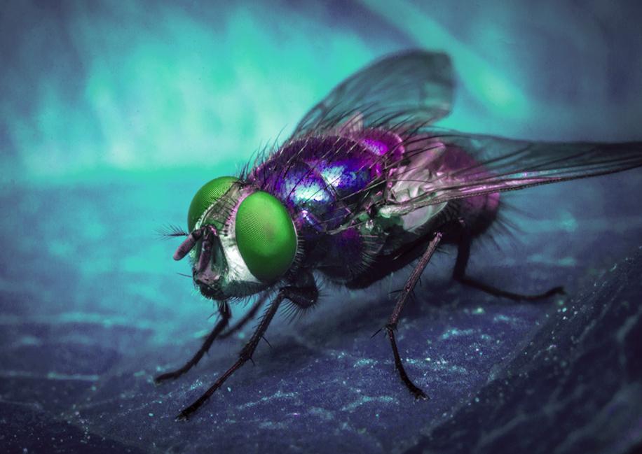 """Poder, eleições e síndrome da """"mosca azul"""" em tempos de pandemia"""